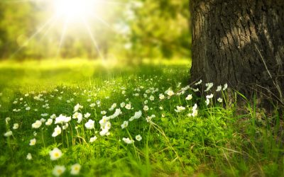 Hay fever and the benefits of Reflexology